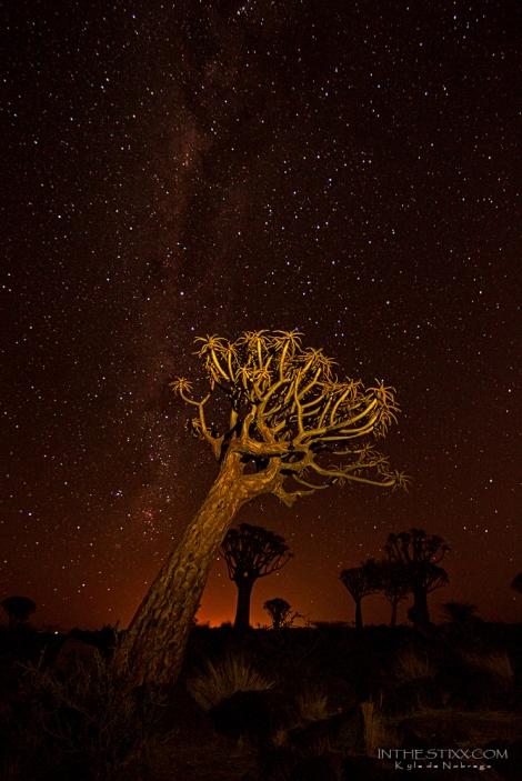 Quiver tree stars 2