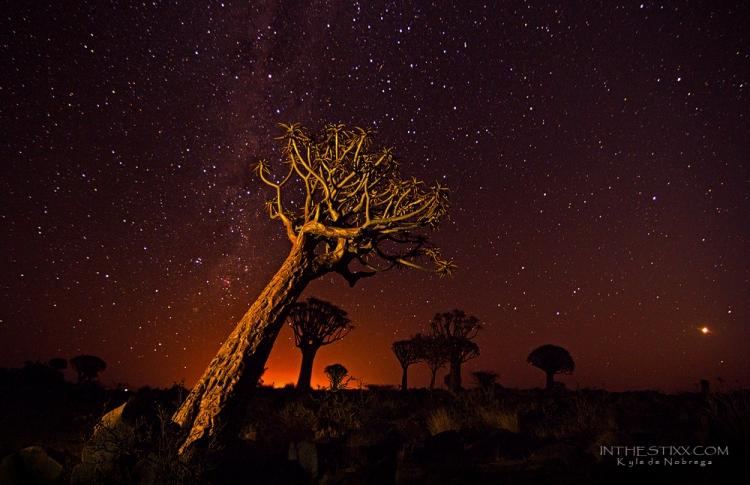 Quiver tree stars